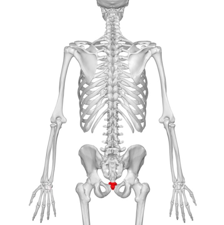 Coccyx, oh my coccyxPelvic Health and Rehabilitation Center